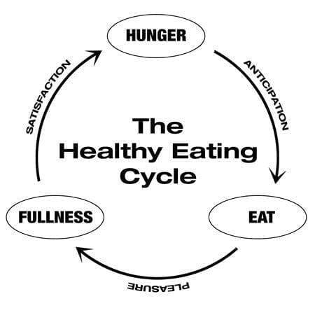 healthy eating cycle diagram with 3 steps from hunger, eating, and fullness
